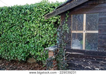 Old Desolate Barn With Dirty Vintage Window, Cute Small House On Back Yard.