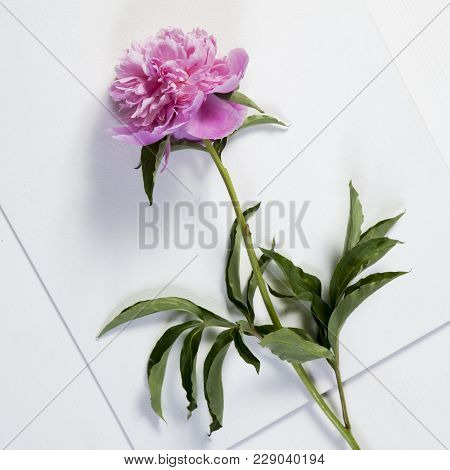 Cerise Pink Peony Flowers On The Wooden White Table