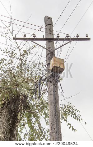 Rusty Electrical Junction Box On An Old Wooden Post. Electric Pole. Wooden Pole With An Electric Shi