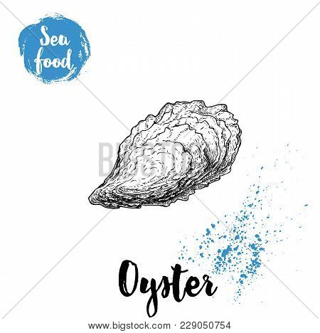 Hand Drawn Closed Oyster Shell. Seafood Sketch Style Illustration. Fresh Marine Mollusk.