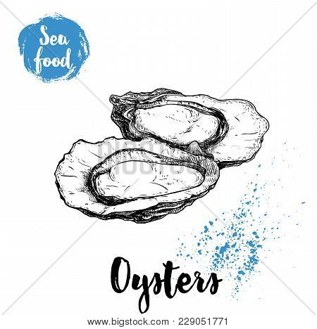 Hand Drawn Oysters Composition. Seafood Sketch Style Illustration. Fresh Marine Mollusks In Opened S