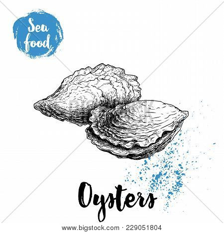 Hand Drawn Oysters Composition. Seafood Sketch Style Illustration. Fresh Marine Mollusks In Closed S