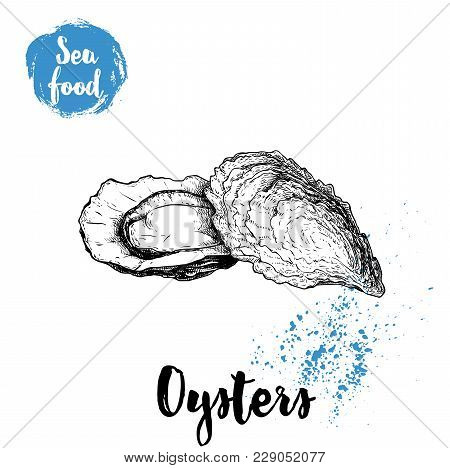 Hand Drawn Oysters Composition. Seafood Sketch Style Illustration. Fresh Marine Mollusks In Closed A