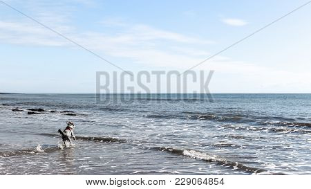 Captured On The Coasts Of The Gower In Wales. A Long Dog Walk Turned Into A Swim For The English She