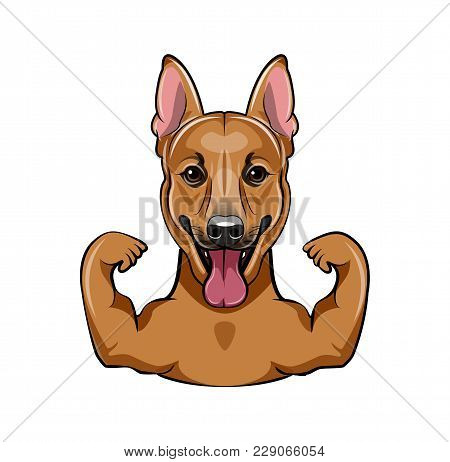 German Shepherd Dog With Muscules. Vector Illustration Isolated On White Background.