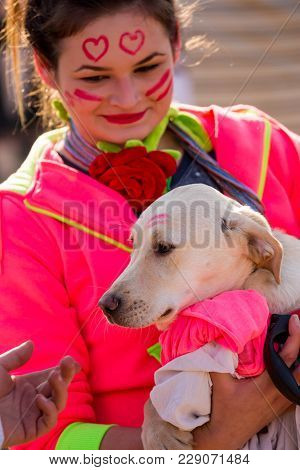 Pernik, Bulgaria - January 26, 2018: White Dog With Red Lipstick Kiss On Head Calmly Rests In The Ar