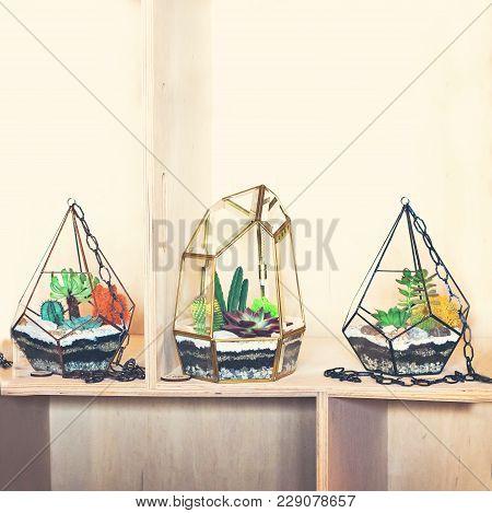 Composition With Succulents. Mini Succulent Garden Garden, Beauty, Flora