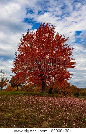 Autumn, Fall Landscape. Tree With Colorful Leaves. Red Fall Tree.