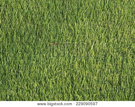 Green Artificial, Composed Of Fibers, Synthetic Lawn As Background