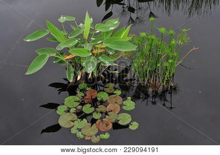 Serene Reflecting Pool With Green Aquatic Plants