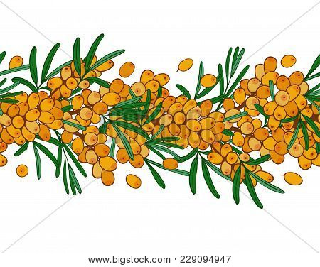 Seamless Ornament Branch Of Sea Buckthorn With Berries. Vector Seaberry