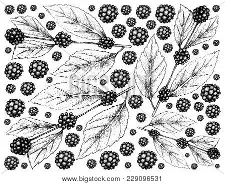 Berry Fruits, Illustration Wall-paper Background Of Hand Drawn Sketch American Beautyberry Or Callic