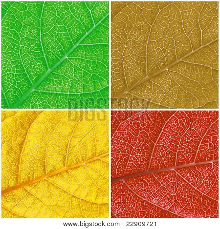 Color Leafs Background