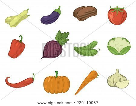 Vector Vegetables Healthy Tomato, Carrot, Potato Vegetarians Pumpkin Organic Food Modern Vegetably W