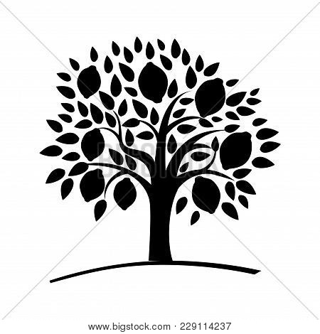Silhouette Lemon Tree With Green Leaves. Vector Illustration Of A Tree With Ripe Lemons. Black And W