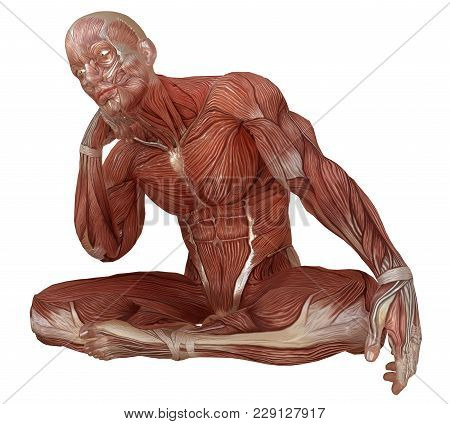 3d Illustration Male Body Without Skin, Anatomy And Muscles Isolated On White