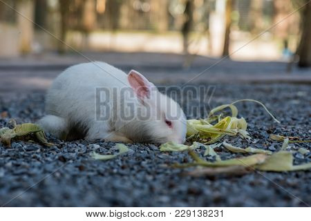 Rabbit, Lovely Animal And Pet In The Garden