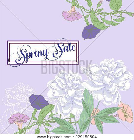 Spring Sale Background With Bindweed And White Peonies. Vector Illustration