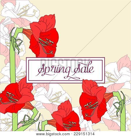 Spring Sale Background With Red Pink Amaryllis. Vector Illustration