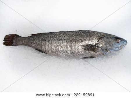 Meagre Fish On Ice