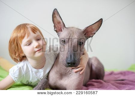 A Girl Hugs Her Mexican Hairless Dog