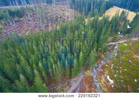 Aerial View Of Green Forest And Mountain River. Forest With Christmas Trees From Above. Picturesque