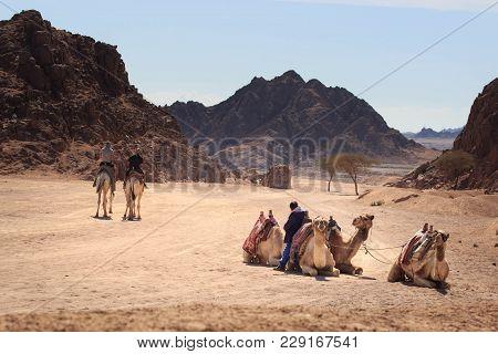 Caravan Going Through The Sand Dunes In The Sinai Mountains, Egypt, Sharm El Sheikh