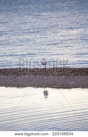 Sea. Beautiful Seascape. Seagulls On The Sea. Seagulls On The Shore