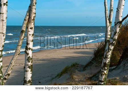 Birch Trees By The Sea, Seascape, A Small Wave Of The Sea, The Baltic Sea Waves, Cargo Ship At Sea