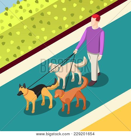 Employed Worker During Dogs Walking On Leashes On Walkway With Green Bushes Isometric Background Vec