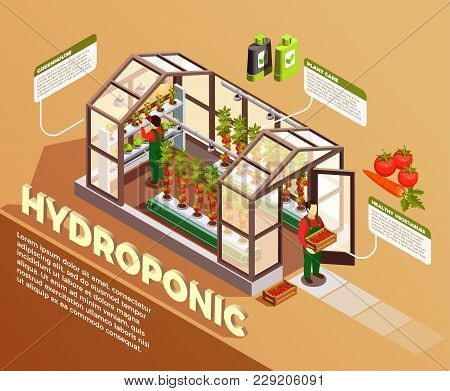 Hydroponic Isometric Composition With Greenhouse Image And Description Of Construction Elements And