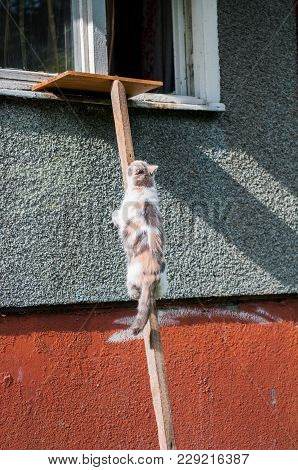 Cat Climbing Up On A Wooden Plank The Ladder Leading To The Window.