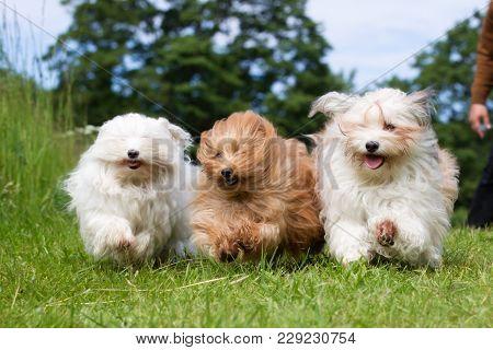Three Dogs Running Towards Camera