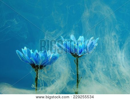 Blue Chrysanthemum Inside In Water On A Blue Background. Flowers Aster Under The Water With Acrylic