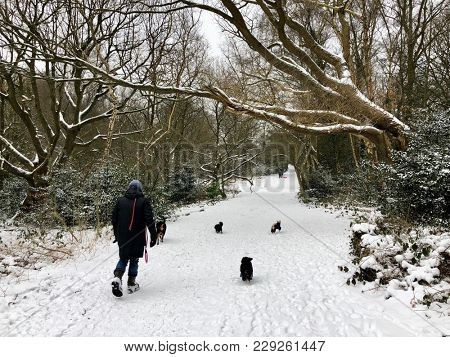 "HAMPSTEAD, LONDON - MARCH 1, 2018: Dog walkers and sledging on Hampstead Heath during Storm Emma, also know as the ""Beast from the East"" weather front, in Hampstead, North London, UK."