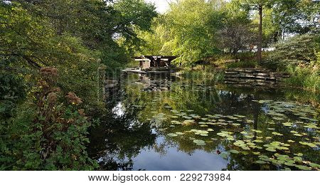 Beautiful Lily Pond With Lily Pads Surrounded By Green Trees On A Sunny Summer Day With The Trees Re