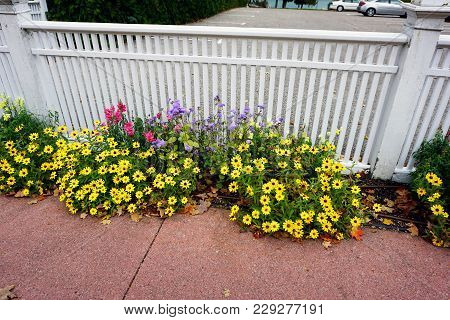 Autumn Flowers Bloom Beside A Sidewalk In Bay View, Michigan, During October.