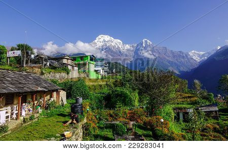 Ghandruk, Nepal - Oct 21, 2017. Mountain Village At Sunrise In Ghandruk, Nepal. Ghandruk Is A Popula