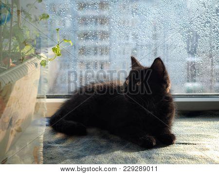 Kitten On The Windowsill Of The Window. Rain Drops On Glass. The Rays Of The Spring Sun. Kitten Look