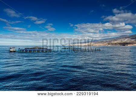 Offshore Fish Farms Clustered Around The West Coast Of Tenerife, Spain. Sea Bass And Common Bream Ar