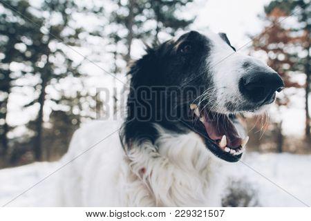 Dog dental hygiene concept. Close-up dog mouth.