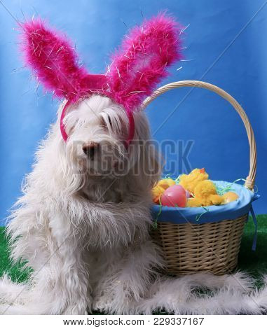 Easter Dog Portrait. A beautiful dog poses for her Easter photos in a studio.
