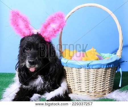 Dog. Dog with Easter Basket.