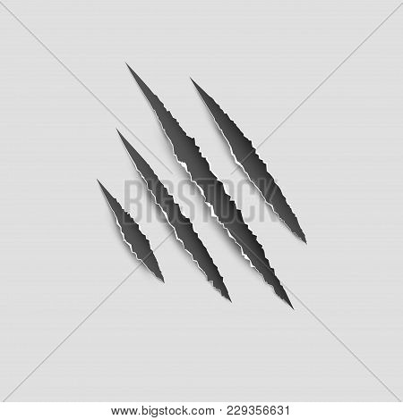 Claws Paw Scratches Isolated Vector On White Background. Animal Claws Horror Scratch Tiger, Lion Or