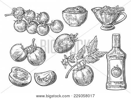 Set Of Hand Drawn Tomatoes. Tomato, Half And Slice, Ketchup Bottle, Tomato Sauce In A Plate. Vector