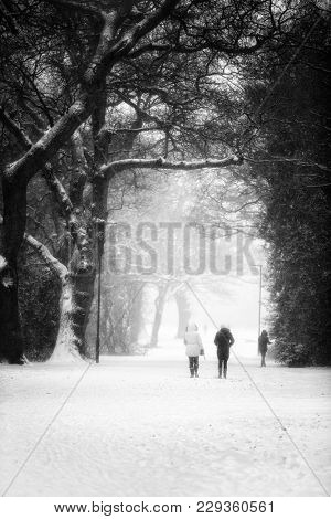 Walking in the park in heavy winter snowfall. Black and white.
