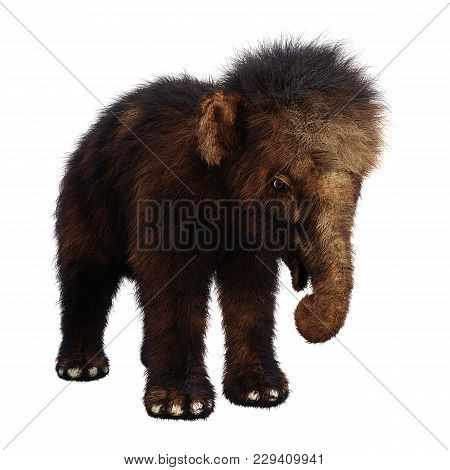3D Rendering Baby Woolly Mammoth On White