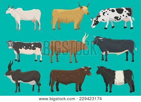 Vector Bulls And Cows Farm Animal Cattle Mammal Nature Beef Agriculture And Domestic Rural Bovine Ho