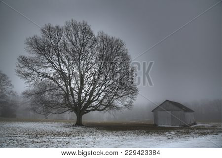 Large Deciduous Tree With A Barn In The Background, Snow On The Ground And Fog In The Air.