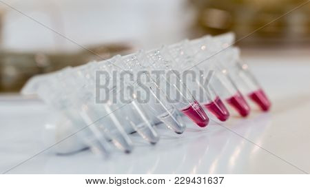 Close Up Of Plastic Micro Centrifuge Tubes
